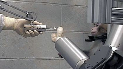 A rhesus monkey controls a robotic arm with its mind to feed itself. The research was done by researchers at the University of Pittsburgh School of Medicine.