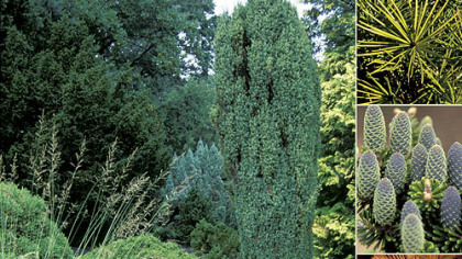 """Conifers for Gardens"" by Richard L. Bitner."