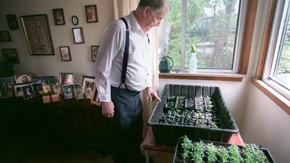 Fred Limbaugh looks over some of his 'Potato Top' plants in 2000.