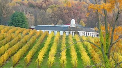 Barboursville Vineyards is one of Virginia's oldest.